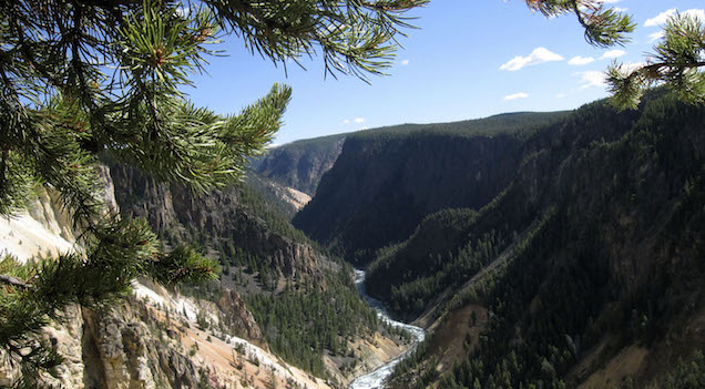 Old Man Taking a Picture Falls Into Yellowstone Grand Canyon