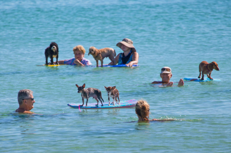 Image result for Miami, Florida dogs