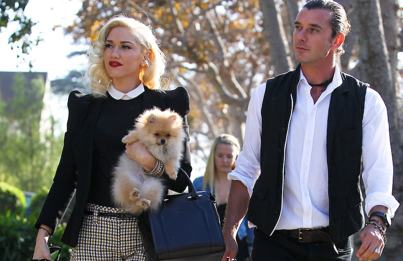 Delightful Gwen Stefani And Gavin Rossdale: Divorcing, As Iu0027m Sure Youu0027ve Heard. There  Were Probably A Number Of Factors That Went In To The Decision, But This  Week, ...