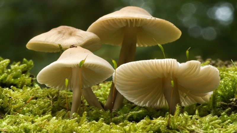 how to grow mushrooms indoors large scale