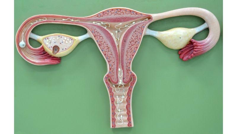iz-vlagalisha-vitekaet-sperma-podborka