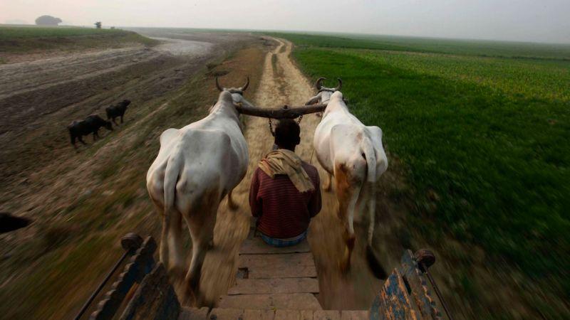 Scale Fl Progressive Chicken In Texas Recalled Over