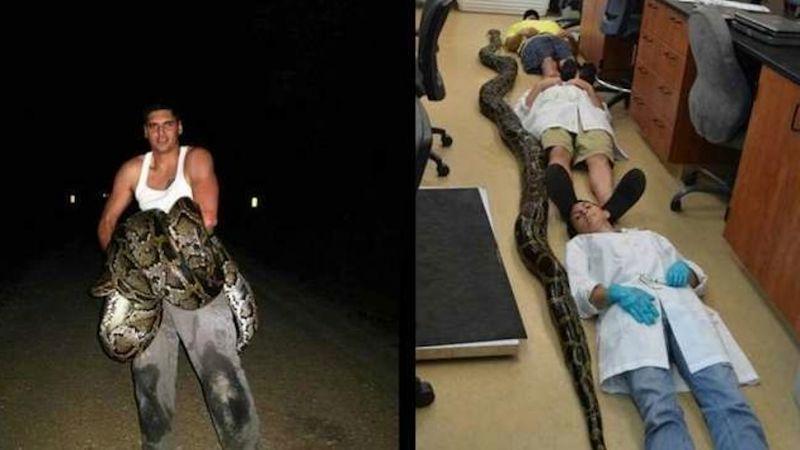 19-Foot Python Captured & Killed Near Miami Sets Florida State Record