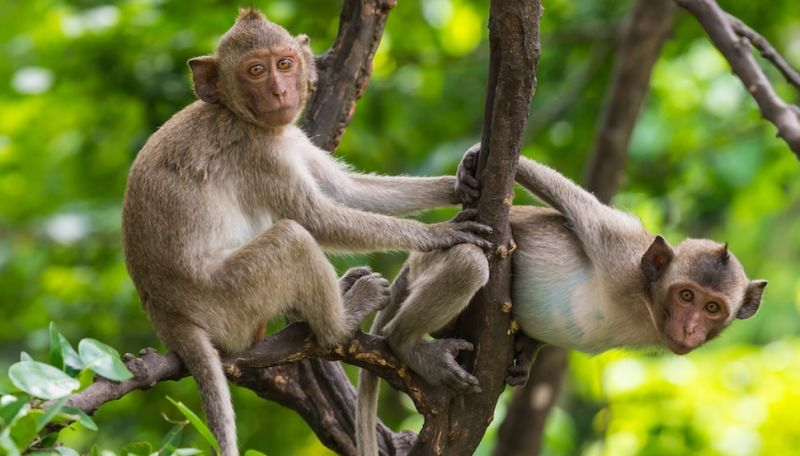 Florida is Being Overrun By Herpes-Infected Monkeys