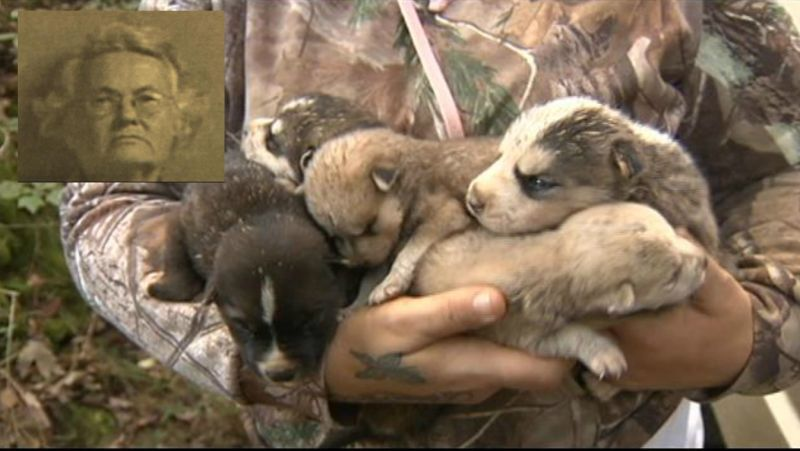 Hoarder with Long History of Animal Abuse Eaten by Pet Wolfdogs