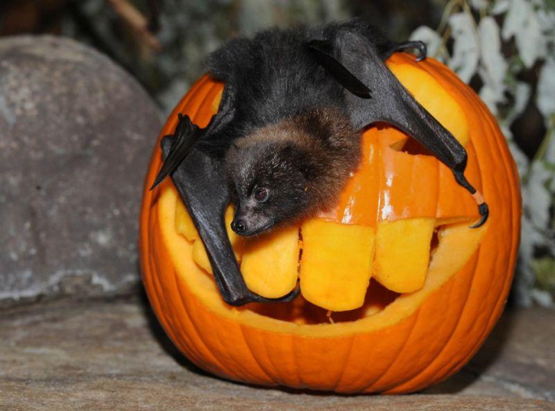 Happy Halloween! Bats Will Kill Us All