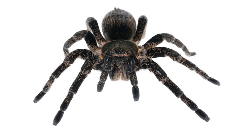 Kansas woman charged with arson after trying to light a for How to stop spiders coming in your house