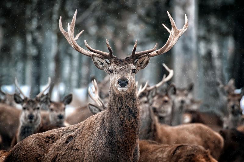 Car Insurance Companies Red Deer