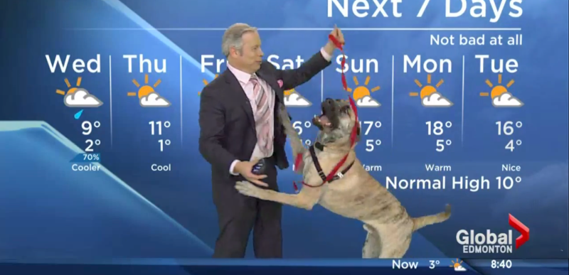 spry dog doesn t give a fuck about the weather forecast