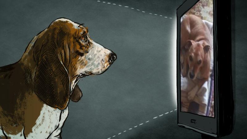 teen dog webcam