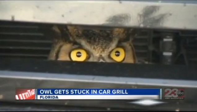 Progressive Near Me >> Amazing Story About Owl Stuck in Florida Woman's Car Grill Yields Amazing Animated GIF