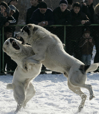 In <em>Free Speech v  Dog Fights</em>, Free Speech Should Win