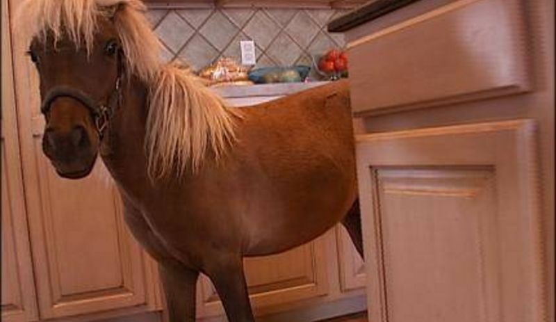 Someone from Long Island Is Giving Away a Mini Horse on Craigslist